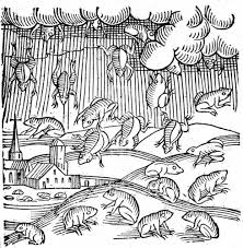 raining frogs u0026 fish a whirlwind of theories