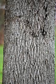 woody allen wondermyway