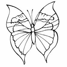 butterfly drawing for kids 1000 images about adults on pinterest