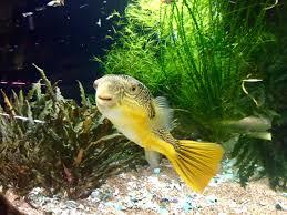 this happy guy from aquarium co op in edmonds wa plantedtank