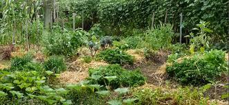 Urban Garden Woodland Hills - how to establish a small space intensive food garden the