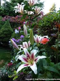 australian garden flowers pin by robyn trudeau on robyn u0027s dreams pinterest dream garden
