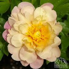 Plants Of Season 4 Joanna by Top 10 For 2016 Perennial Gardening
