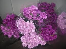 carnations in bulk bulk discount flowers purple carnation