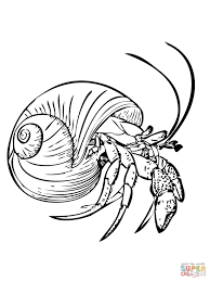 crab coloring page free printable hermit crab coloring pages for