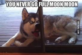 Moon Moon Meme - moon moon teh meme wiki fandom powered by wikia