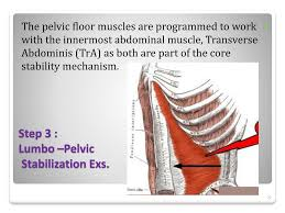 Muscles Of The Pelvic Floor Ppt by Ppt Muscle Training For Pelvic Floor Muscle Dysfunctions