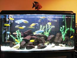 Home Decoration by Realistic Fish Tank Decoration Ideas Tedxumkc Decoration