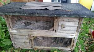 Rabbit Hutch Set Up Double Tiered Rabbit Hutch In Worthing Friday Ad