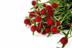 Wholesale Flowers Online Wholesale Flowers Online A Few Unusual Examples Tesselaar Flowers