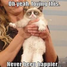 Internet Meme Cat - grumpy cat meme 04