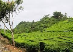 Teh Walini photography tips at tea plantation walini ranca a guide of best