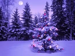 beautiful outdoor christmas trees at night 1920x1080 full hd