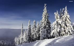 all white pine trees walldevil