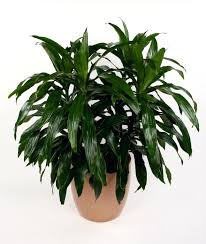 small low light plants house plants low light houseplants safe for cats inside bulbs