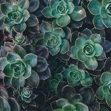 decorative succulent wall gardens u2013 bombay house
