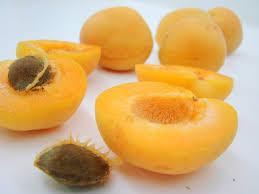 the apricot maja u0027s viennese kitchen