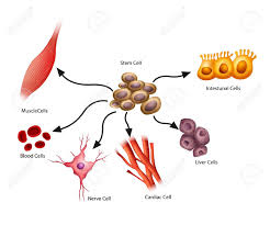 5 294 stem cell stock vector illustration and royalty free stem