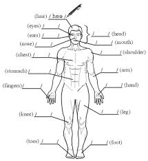 human body parts worksheet spanish human anatomy body