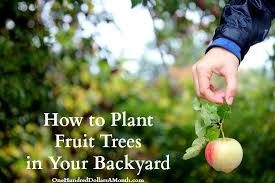 how to plant fruit trees in your backyard one hundred dollars a