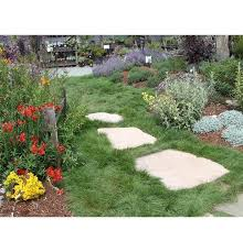 Lawn Free Backyard Blend Selection Guide Delta Bluegrass Company