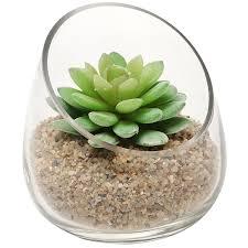 Succulent Plant Amazon Com Modern Clear Glass Succulent Plant Vase Small Candle