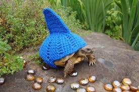 Tortoise Meme - i can has cheezburger tortoise funny animals online cheezburger