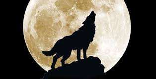 wolf moon and a big day for venus astro bob