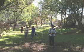 sydney the hills treetops sydney the ponds walk u201d dundas u0026 cumberland state forest west pennant