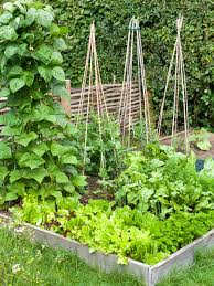 What To Plant In Your Vegetable Garden by How To Build A Raised Vegetable Bed Hgtv