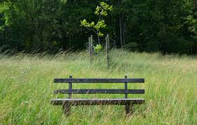 Wooden Park Bench Free Images Tree Grass Wood Trail Lawn Meadow Prairie