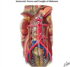 Netter Atlas Of Human Anatomy Online Review Of Atlas Of Human Anatomy 4th Edition By Frank Netter