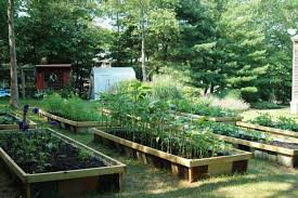 backyard organic farming backyard farming on an acre ideas