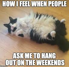 Lazy Day Meme - lazy cat meme 100 images lazy cat meme funny cute angry grumpy