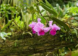plants native to africa native plants 10 houseplants in their natural environment bob vila