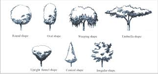 different types of trees types of the trees shape