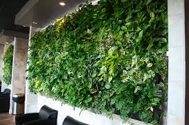 livewall green wall enlivens a peet u0027s coffee u0026 tea store at an