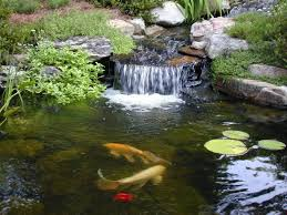 ponds with waterfalls and stone also koi fish plus hydrophite in