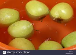 apples floating in a bucket of water traditionally apple bobbing