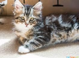 boyfriend got to name the kitten name cuteimages net