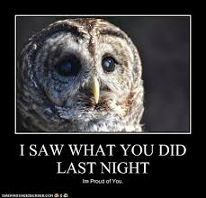 Proud Of You Meme - 16 funny owl memes for fum and interesting articles feafum