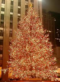 98 best rockefeller center trees images on
