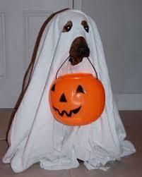 Boxer Puppy Halloween Costumes Scuba Diver Costume Halloween Costume Contest Costume Contest