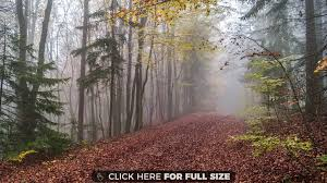 a misty trail in the bavarian woods wallpaper