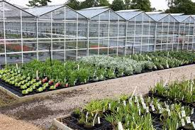defra figures reveal increase in uk ornamental horticulture