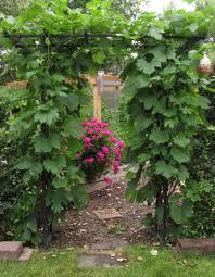 trellis and vine cheyenne garden gossip