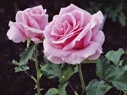 28 beatiful flower most beautiful flower in the world 2013
