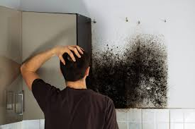 black mold in basement basement decoration by ebp4