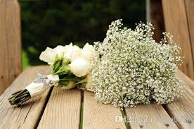 baby breath 2017 2013 fresh baby s breath seeds wedding flower seeds