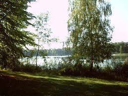file trees near lake jpg wikimedia commons